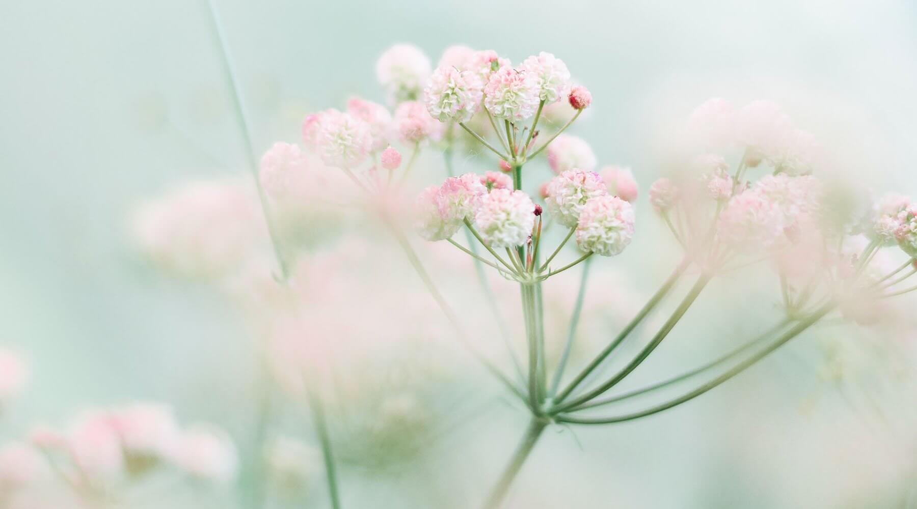 natural tips for glowing spring skincare
