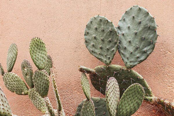 benefit of prickly pear oil in skincare